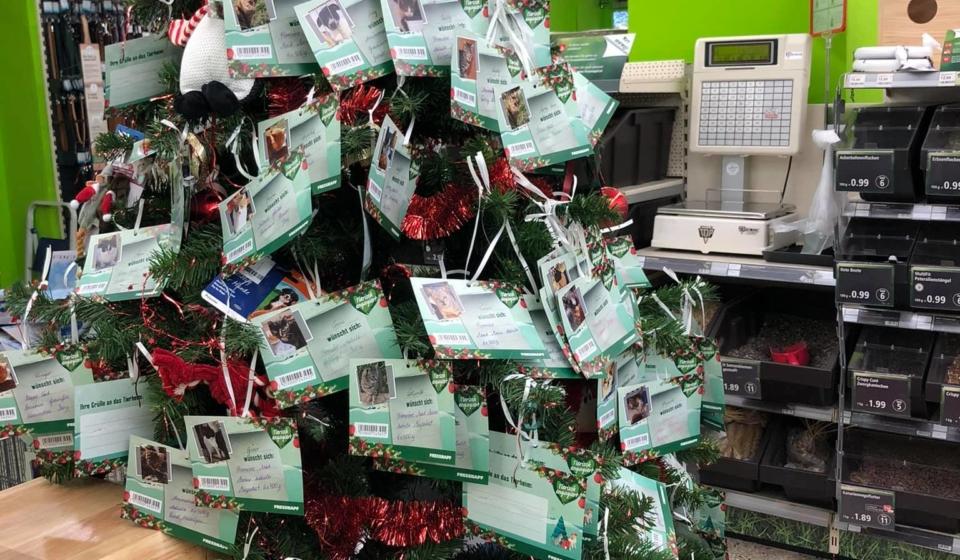 Weihnachtsbaum Tierhilfe kos