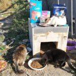 Unser Futter für die Straßenkatzen