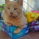 Happy Cat auf Samos