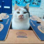 Katze in der Schachtel