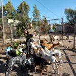 Straßenhunde auf der griechischen Insel Kos
