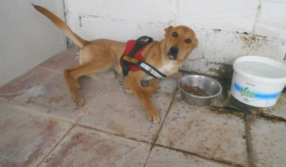 Sammy der Unfallhund von Samos